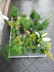 Répartition des plantes