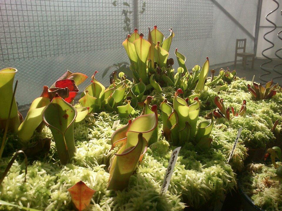 plante carnivore hydroponie